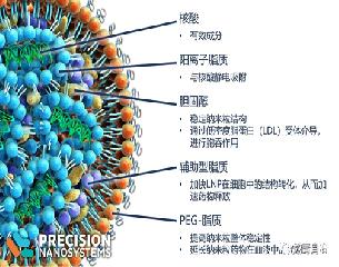 脂质体LNP和mRNA疫苗递送原理